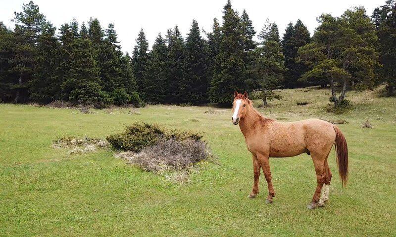 at yaylası