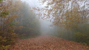 Kuzuyayla Tabiat Parkı